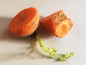 野菜スタンプ